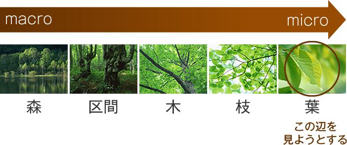 「木を見て森を見ず」の画像検索結果
